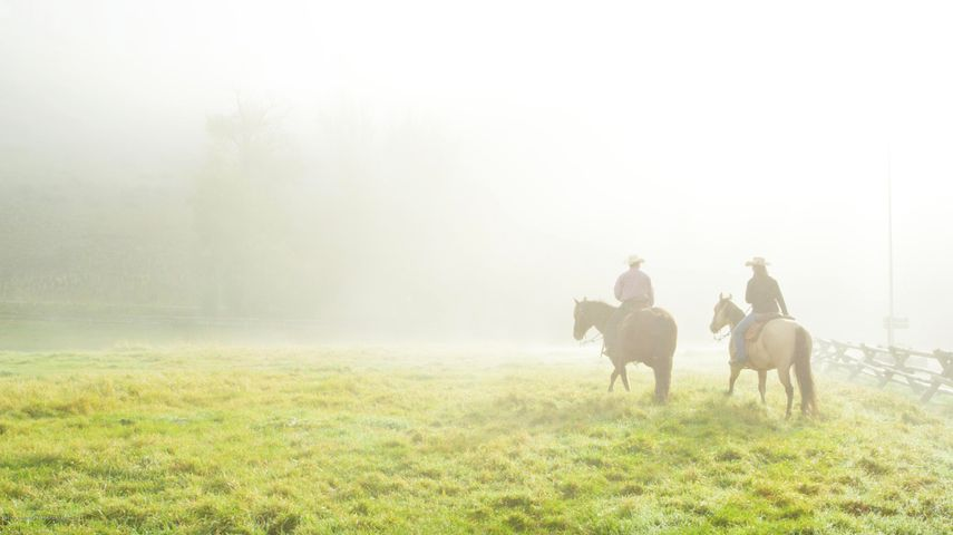 4. Horses in the Mist