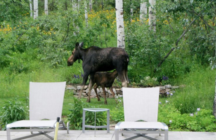 Mommy & baby Moose, south patio