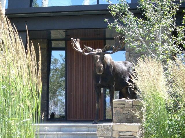 Bull moose guarding entrance