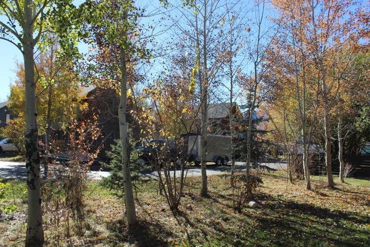 Back Yard Aspen Grove