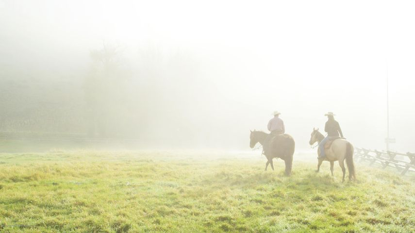 5. Horses in the Mist