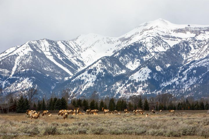Elk Migration Corridor