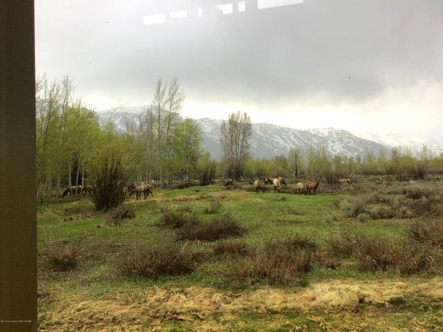Elk 5-13-2019 IMG_0020