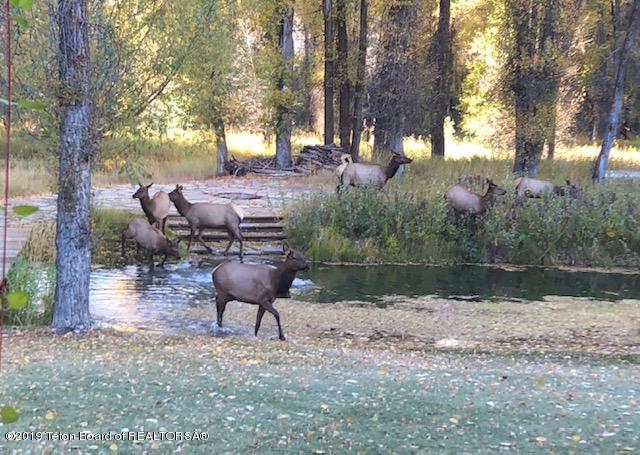 Elk at fire pit