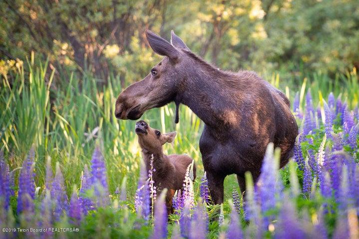 Mama + Baby Kiss