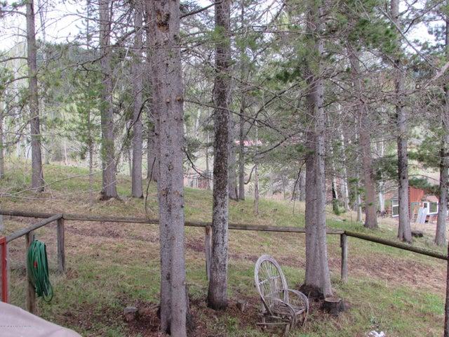 Trees Around Main House