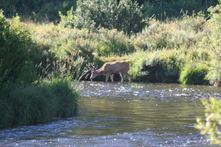 Buck in creek
