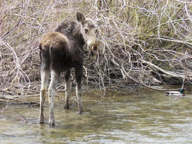 moose and mallard