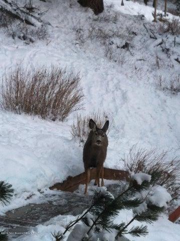 pine drive deer