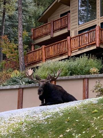 new main moose pic