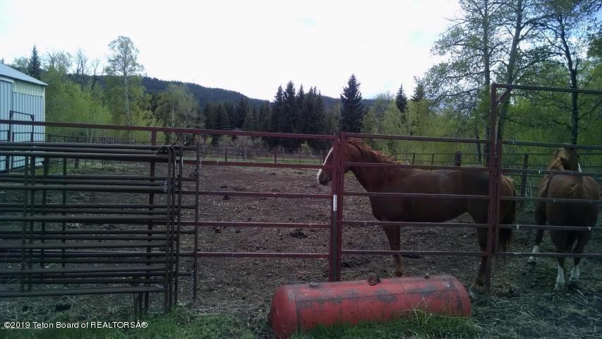 Horse Set up