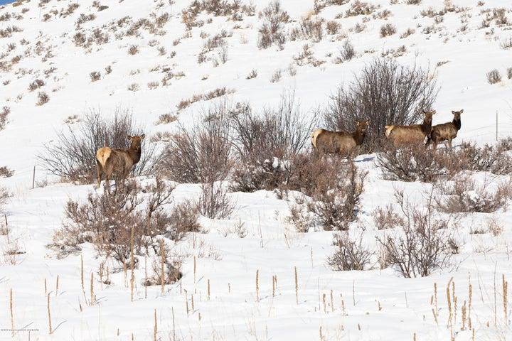 Wildlife View