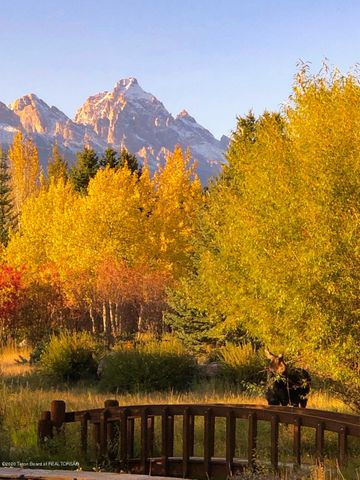 Garden with Moose & Fall Colors, Tetons