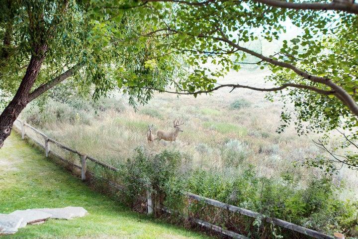 275 N Bar Y Road - Deer
