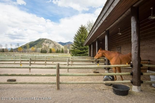 42. Horse Runs from Barn