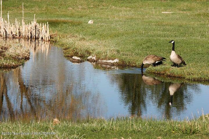 Big Trails Exterior Geese 12 100 dpi