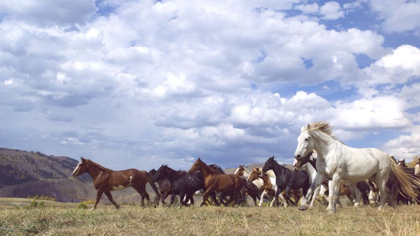 6. Horses on the Ranch Estates