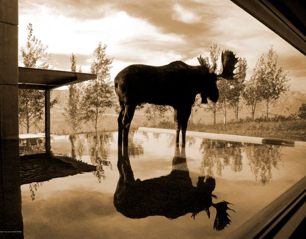 Moose in reflecting pond