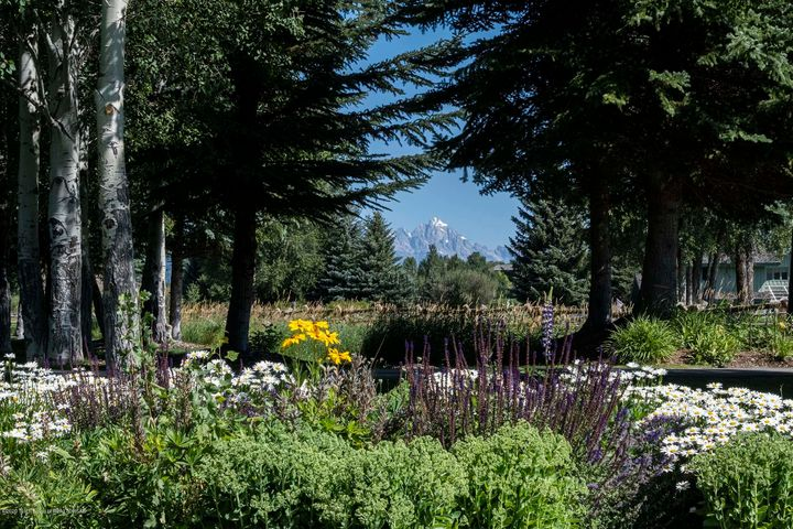 Mature Landscaping 2