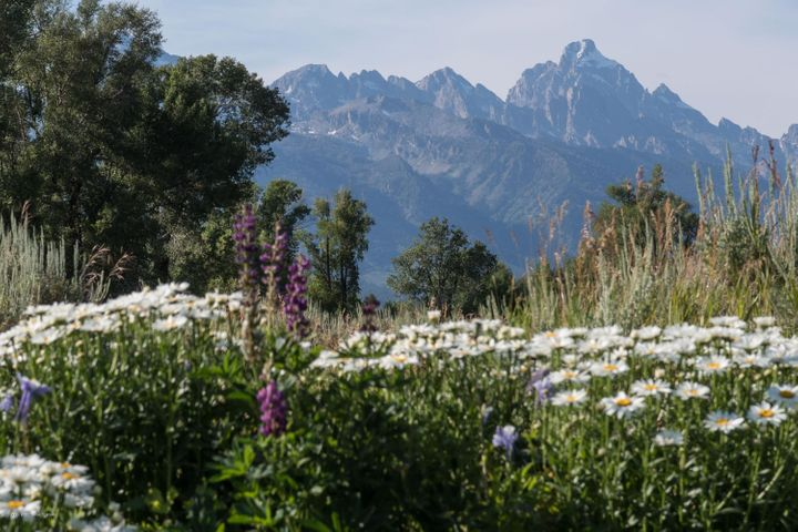 Tetons and daisys