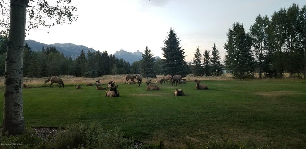 Elk herd camping in the yard