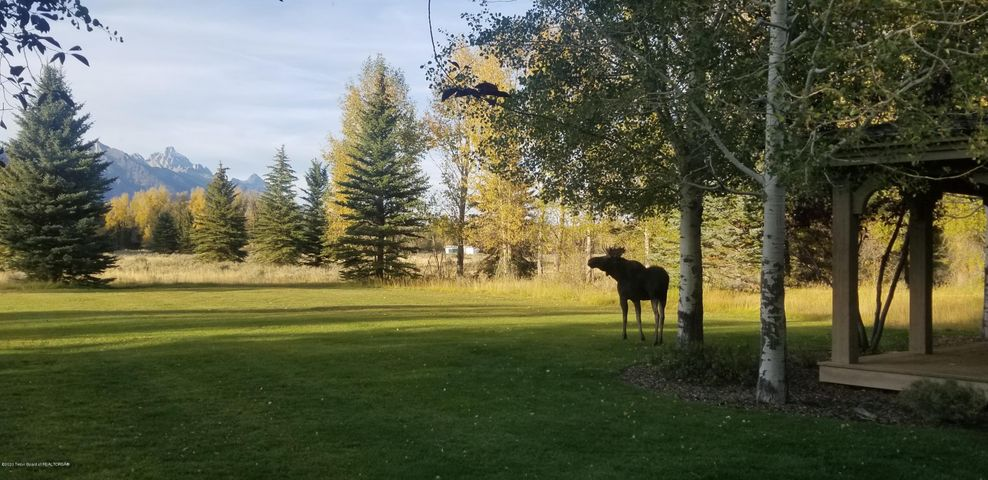 Moose at the guest house 2