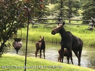 Moose Hudgens