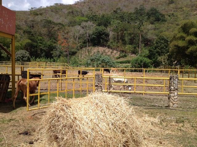 Industrial Miranda>Paracotos>La Colina - Venta:641.347.000.000 Precio Referencial - codigo: 13-978