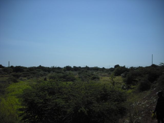 Terreno Zulia>Maracaibo>Avenida Milagro Norte - Venta:334.608.000.000 Bolivares - codigo: 13-1950