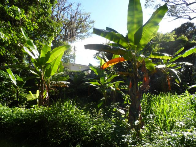 Casa Distrito Metropolitano>Caracas>Los Guayabitos - Venta:384.808.000.000 Precio Referencial - codigo: 13-3823