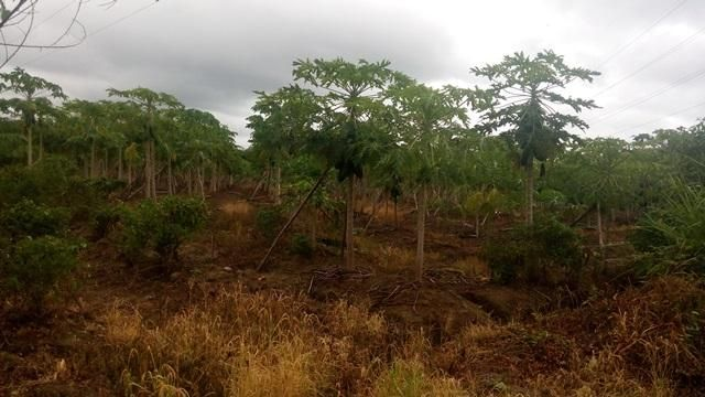 Terreno Miranda>Rio Chico>El Guapo - Venta:916.000.000 Precio Referencial - codigo: 15-9385