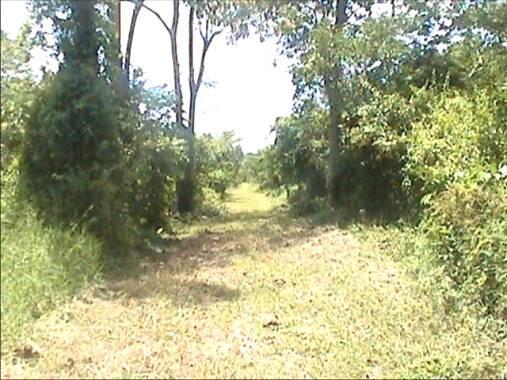 Terreno Miranda>Higuerote>Higuerote - Venta:88.126.000.000 Bolivares Fuertes - codigo: 15-9502
