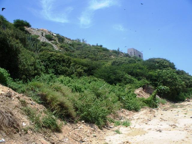 Terreno Vargas>Catia La Mar>Playa Grande - Venta:1.154.220.000.000 Bolivares - codigo: 15-9649