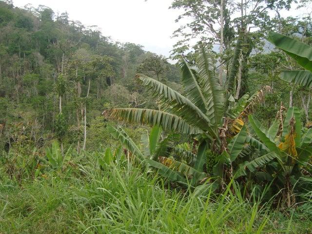 Terreno Vargas>Parroquia Carayaca>Sector Puerto Cruz - Venta:18.322.000.000 Precio Referencial - codigo: 15-11089