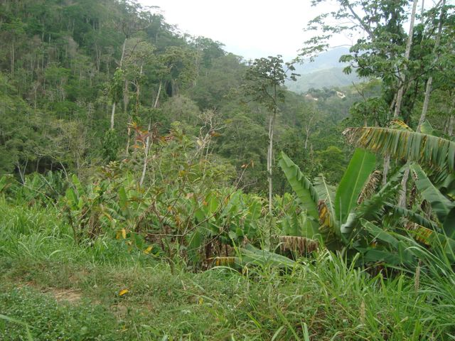 Terreno Vargas>Parroquia Carayaca>Sector Puerto Cruz - Venta:6.923.000.000 Bolivares - codigo: 15-11092