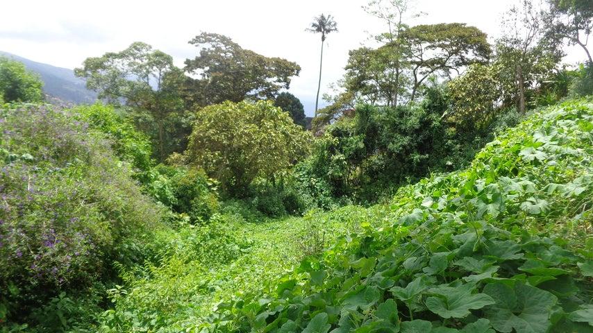 Terreno Aragua>La Colonia Tovar>La Colonia Tovar - Venta:17.625.000.000 Bolivares - codigo: 15-13175