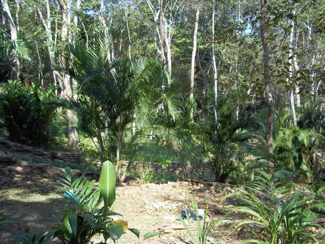Terreno Carabobo>Municipio Naguanagua>La Entrada - Venta:3.054.000.000 Precio Referencial - codigo: 16-3253