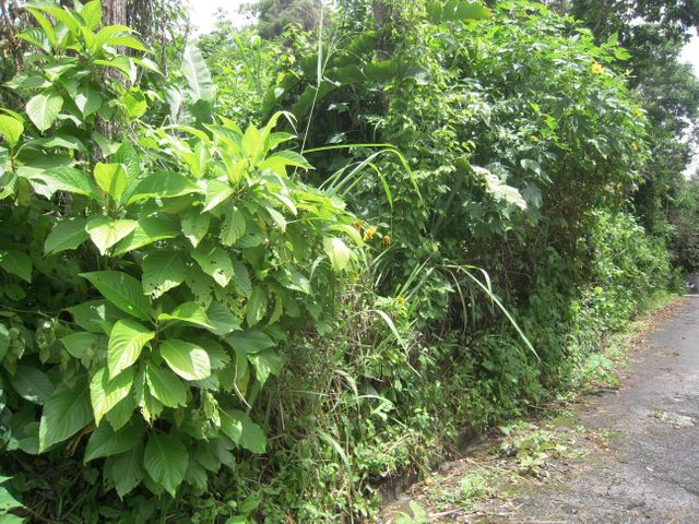 Terreno Distrito Metropolitano>Caracas>Los Guayabitos - Venta:481.977.000.000 Precio Referencial - codigo: 16-7122