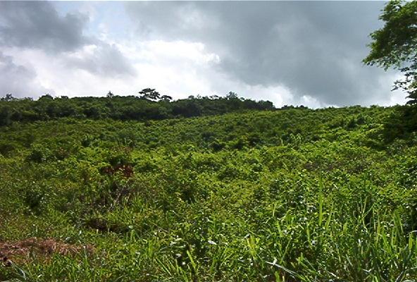 Terreno Miranda>Santa Lucia>Santa Lucia - Venta:196.807.000.000 Precio Referencial - codigo: 16-12872