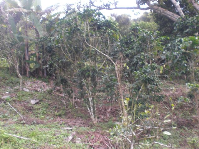 Galpon - Deposito Distrito Metropolitano>Caracas>Hoyo de La Puerta - Venta:99.001.000.000 Precio Referencial - codigo: 16-13354