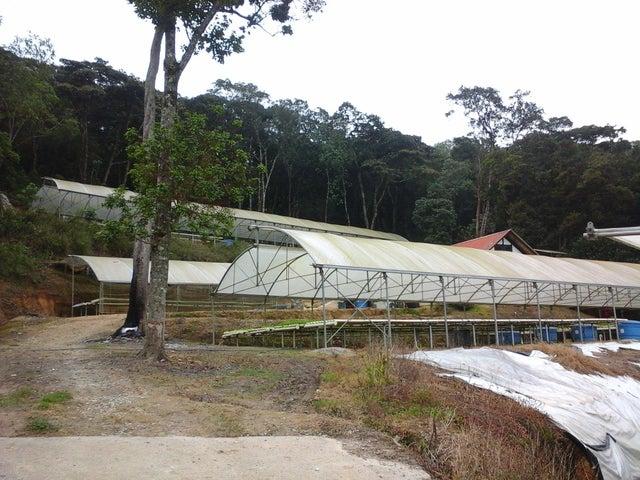Casa Aragua>La Colonia Tovar>La Colonia Tovar - Venta:70.000 Precio Referencial - codigo: 18-13255