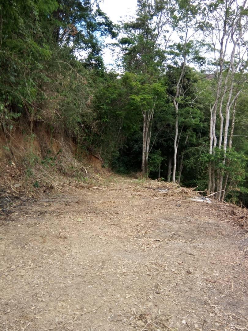 Terreno Distrito Metropolitano>Caracas>Caicaguana - Venta:8.000 Precio Referencial - codigo: 19-9578