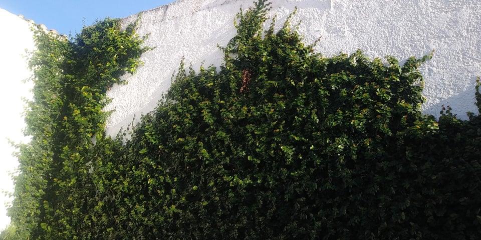 Casa Lara>Cabudare>Los Cerezos - Venta:21.500 Precio Referencial - codigo: 19-10948