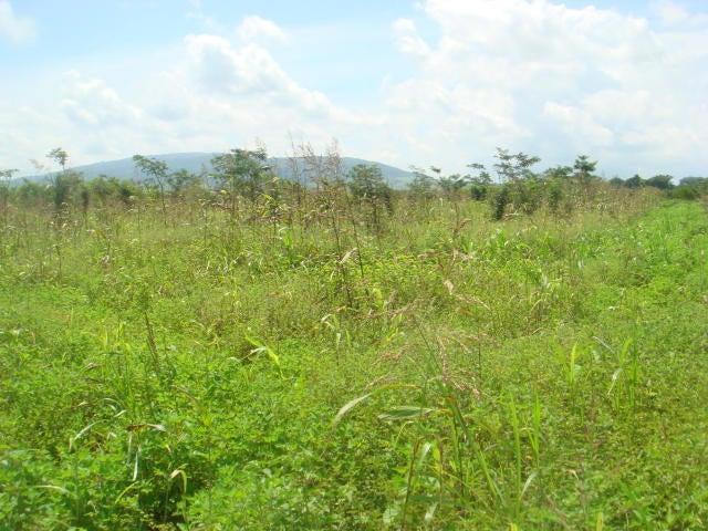Terreno Yaracuy>Yaritagua>Municipio Peña - Venta:2.200 Precio Referencial - codigo: 19-12876