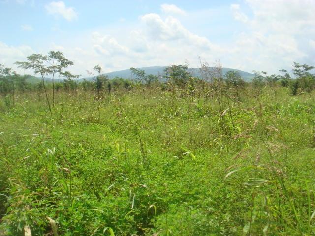 Terreno Yaracuy>Yaritagua>Municipio Peña - Venta:2.200 Precio Referencial - codigo: 19-12878