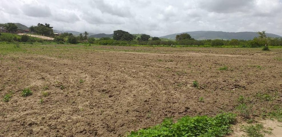 Terreno Yaracuy>Yaritagua>Municipio Peña - Venta:6.500 Precio Referencial - codigo: 19-12911