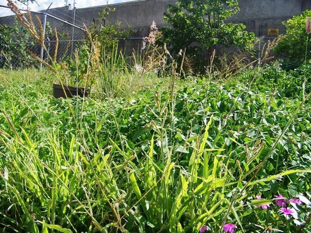 Townhouse Miranda>Guatire>Vista Dorada - Venta:65.000 Precio Referencial - codigo: 19-13162