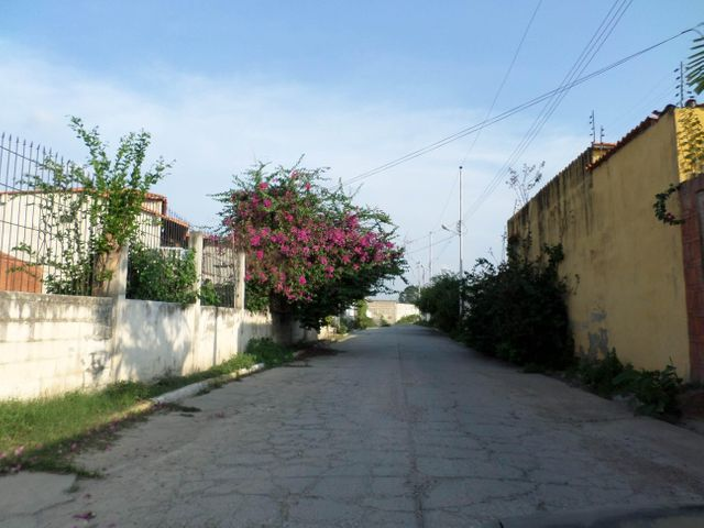 Terreno Lara>Cabudare>Parroquia Jose Gregorio - Venta:600 Precio Referencial - codigo: 20-322