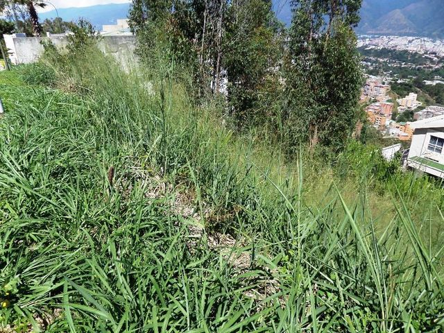 Terreno Distrito Metropolitano>Caracas>El Hatillo - Venta:125.000 Precio Referencial - codigo: 21-9185