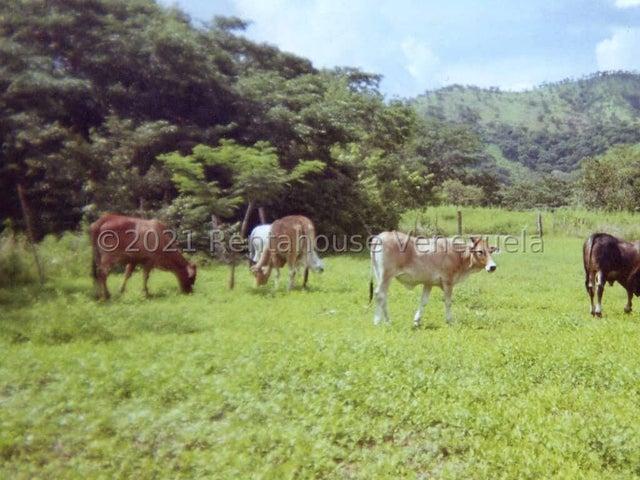 Terreno Guarico>San Juan de los Morros>Via San Sebastian - Venta:50.000 Precio Referencial - codigo: 21-20724